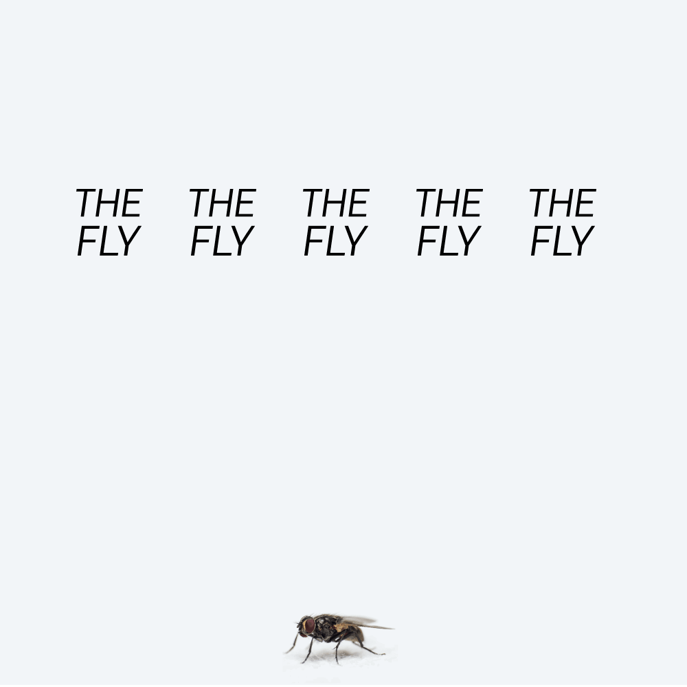 The Fly poem cover image